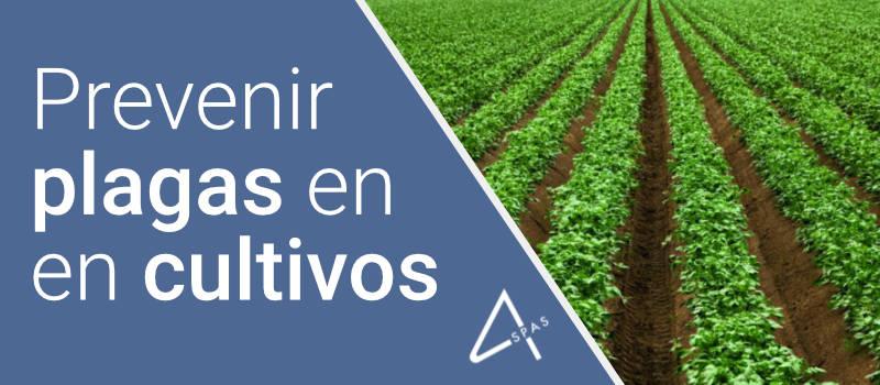 Como prevenir plagas y enfermedades en cultivos