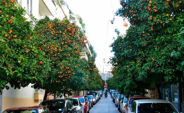 poda arboles frutales madrid
