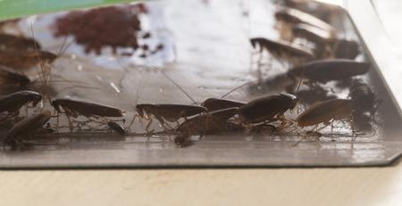 como combatir cucarachas
