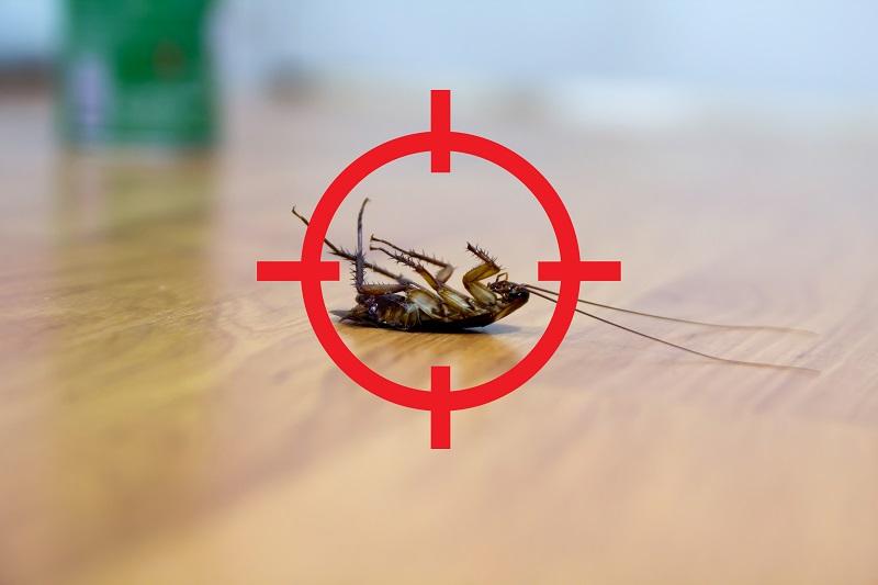 como combatir las cucarachas