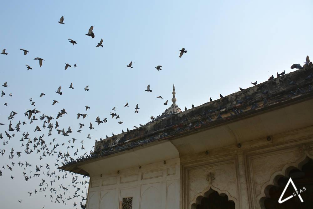 plaga de palomas en tejado