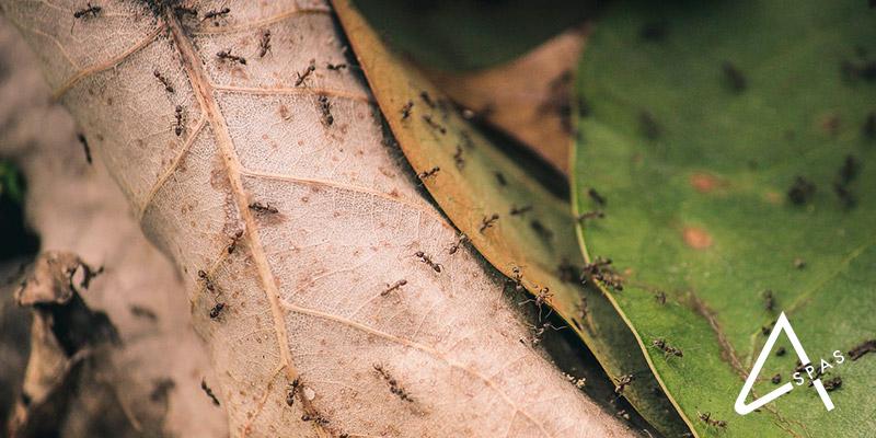 tratamiento-contra-hormigas