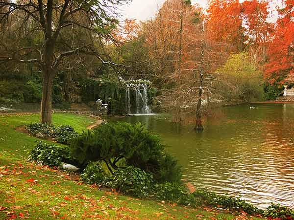 tratamientos-fitosanitarios-madrid-parques